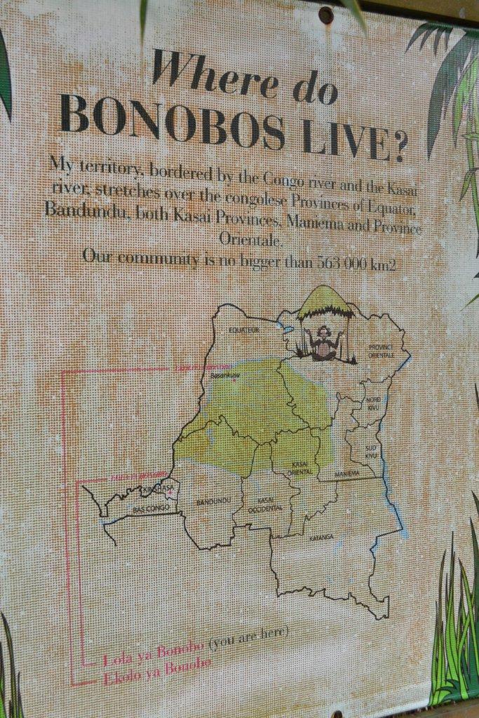 ebelandi_bonobos_4