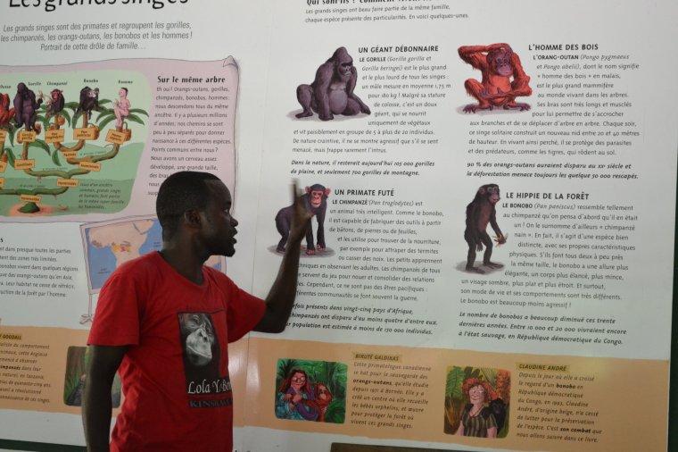 ebelandi_bonobos_5